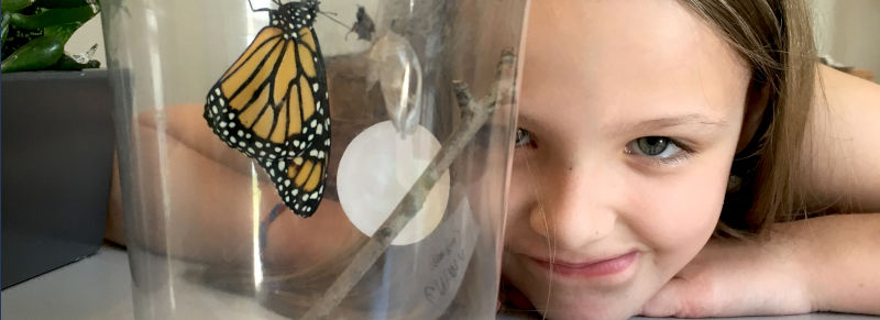 Child watches monarch butterfly emerging at Unitarian Universalist Society
